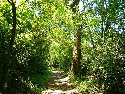 El bosque: